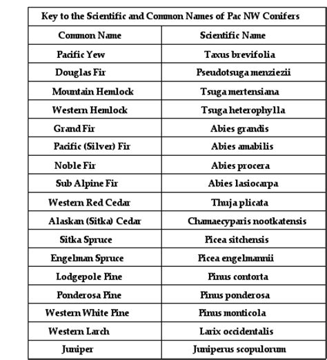 what is the scientific name of conifer scientific common names