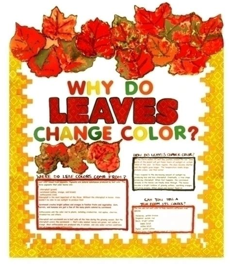 what makes leaves change color make a science fair project poster ideas why do leaves