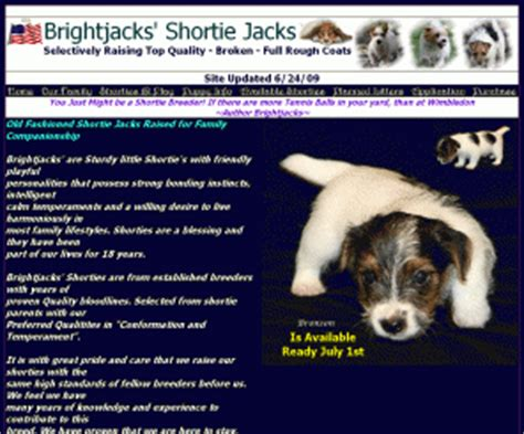 shorty puppies for sale in florida brightjacks legged ejrtca terrier puppies for sale