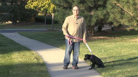 how to your to walk on a lead how to teach your to walk on a leash american pet nutrition