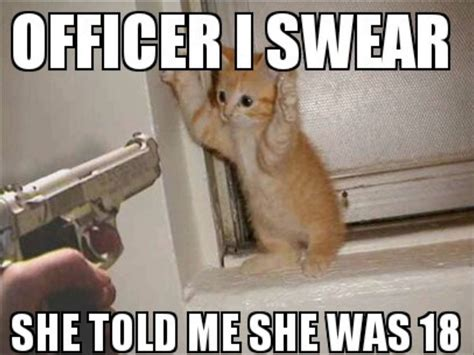 Funniest Cat Memes - 15 most funny cat pictures