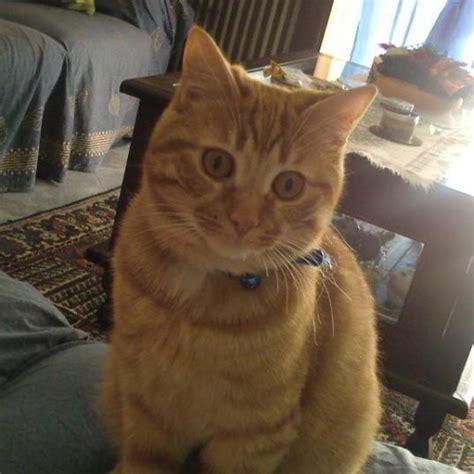 cucciolissimi org cucciolissimi smarrito gatto cucciolissimi org cucciolissimi smarrito gatto rosso