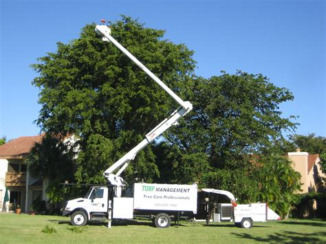service miami miami tree trimming service in miami miami tree service in miami fl