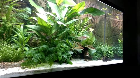 best low light aquarium plants best low maintenance low light low no co2 plants are