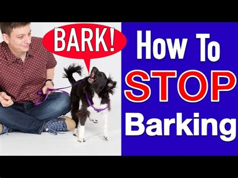 how to teach a to stop barking teach to stop barking treatpouch doovi
