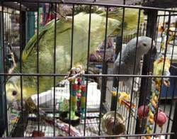 atlanta s exotic bird fair