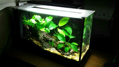 Fluval Spec V Aquascape by The Fluval Spec V Monsterfishkeepers