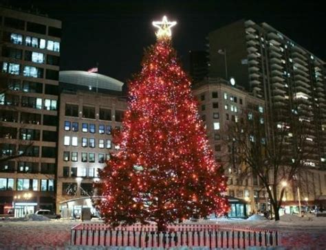 boston s christmas tree begins its journey
