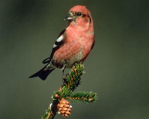 maine bird watching 187 bird watcher s digest