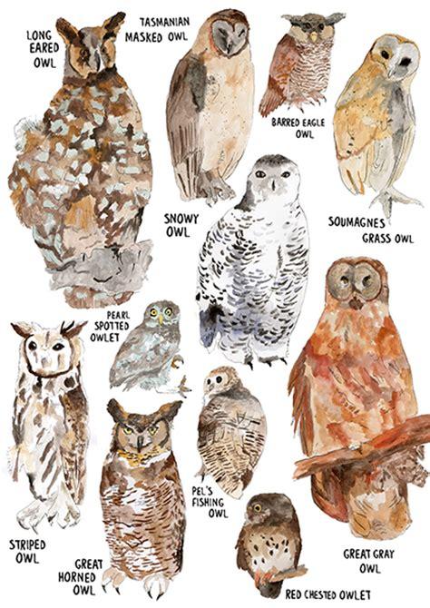 species of owls www imgkid com the image kid has it