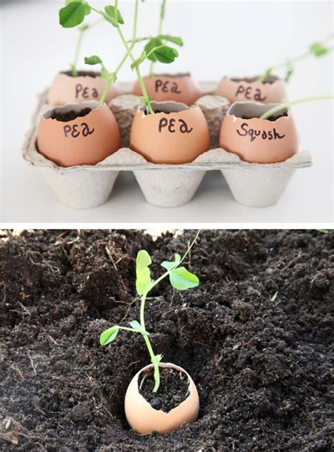 20 Insanely Clever Gardening Tips And Ideas With Pictures Gardening Tips And Ideas