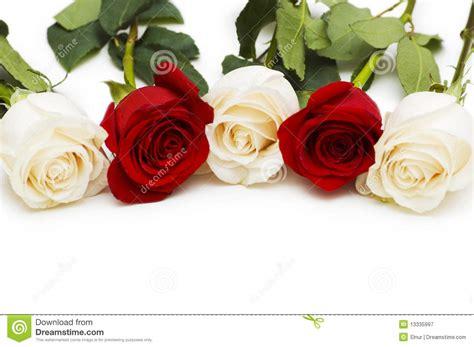imagenes rosas blancas y rojas rosas rojas y blancas aisladas fotograf 237 a de archivo libre