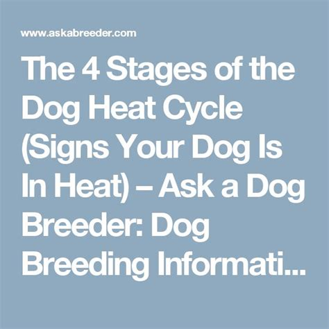 stages of heat in dogs 25 best ideas about in heat on heat paws and beds on sale