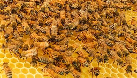 cera d api per candele cera d api per legno per candele cosmetica