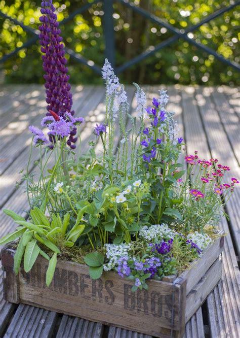 container gardening uk butterfly container garden uk garden ideas