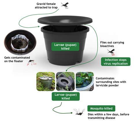 mosquito trap diy yeast mosquito trap brown sugar mosquito trap yeast