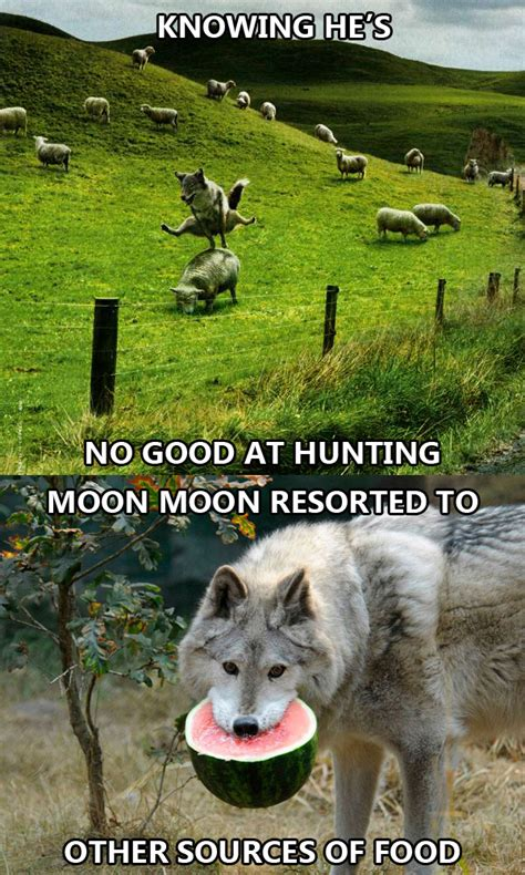 this post is just a this is not the greatest post about a wolf this is just a
