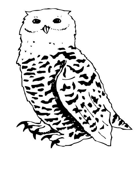 coloring page snowy owl free coloring pages of snowy owls