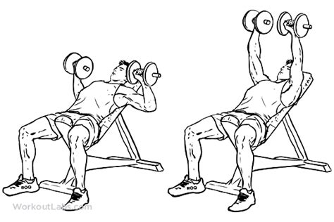 de bench press push incline dumbbell bench press