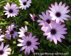 Small Plants That Don T Need Sun by Annual Plants How To Get The Best Out Of Your Annual