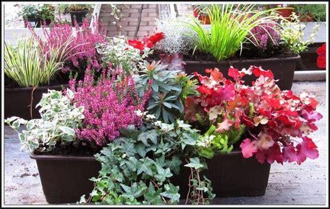 Balkon Sichtschutz Pflanzen Winterhart by Winterharte Pflanzen Balkon Sichtschutz Balkon House