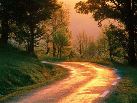 nel verde strada nel verde paesaggi sfondi desktop gratis