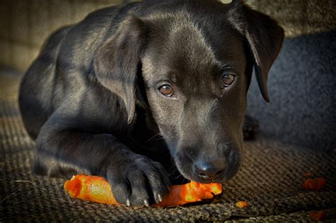 can dogs eat peas vegetables for dogs healthy paws