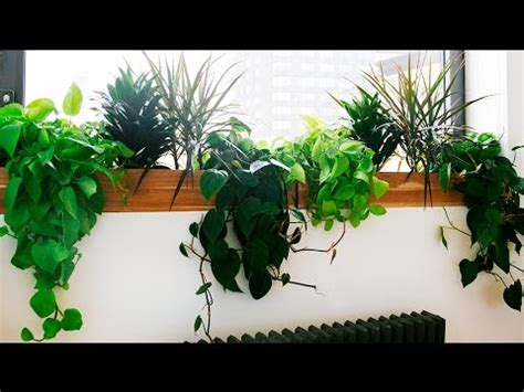indoor plants  indoor plants  light youtube