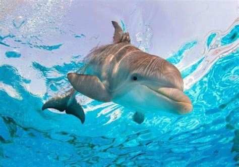 Aquarium Central Filter Dolphin Excellent clearwater photos featured images of clearwater fl tripadvisor