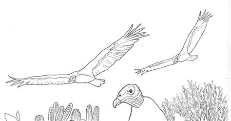 coloring pages desert animals free coloring pages of canimals coloring pages desert