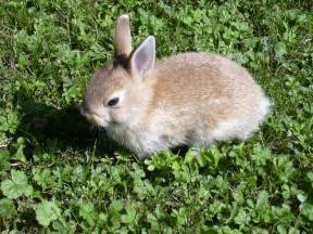 file rabbit small jpg