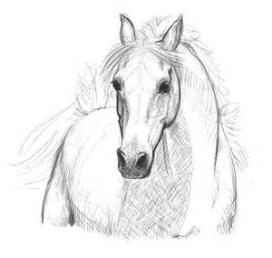 Easy Horse Drawings And Sketches Sketch Coloring Page sketch template
