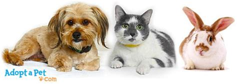 how to an adopted how does it work to adopt a pet 187 adoptapet