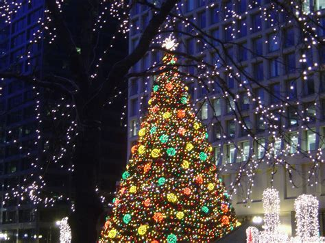 chicago daley plaza christmas tree 2006 photo page