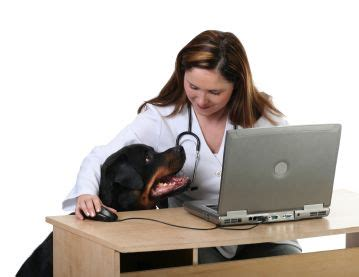 rottweiler health problems rottweiler facts traits free rottweiler puppies