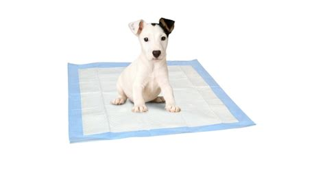 do puppy pads work image gallery pads