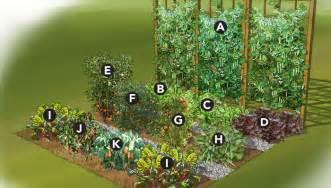 Summer vegetable garden plan