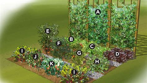 Flower And Vegetable Garden Layout Summer Vegetable Garden Plan