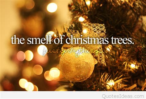 what type of christmas tree smells the best the smell of steemit