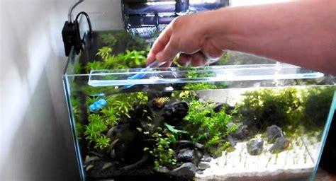 Jual Lu Aquascape Bandung merawat aquascape agar tetap cantik menawan taman air