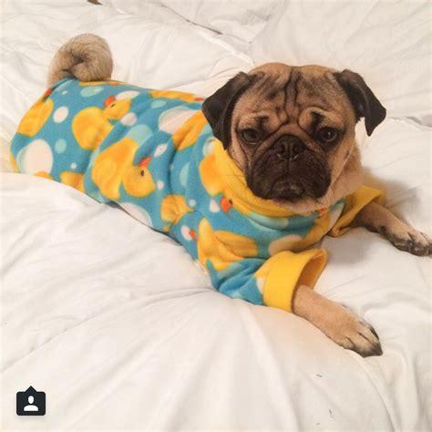 pug pyjamas the most photogenic pugs on instagram unbelievab ly