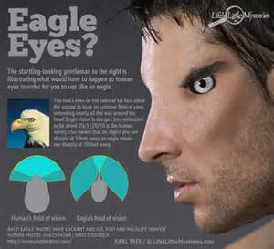 see what you would look like with different color hair what if humans had eagle vision