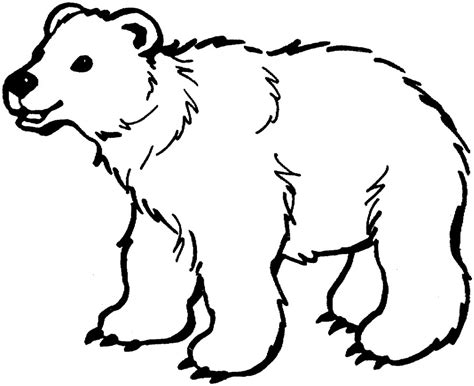 printable polar bear coloring pages coloring me