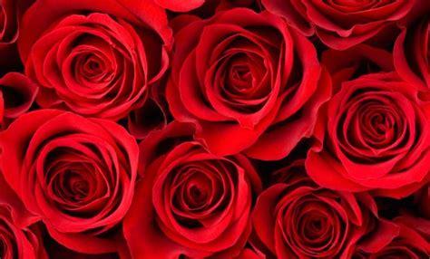 significato colori fiori significato dei fiori le ad ognuno il suo colore