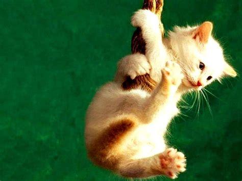 imagenes para fondo de pantalla gatos los mejores fondos de pantalla con lindos gatitos