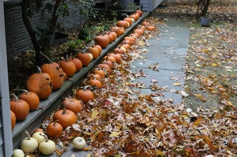 fall garden maintenance lawn and garden tips for success diy network
