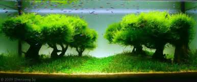 miniature tree look aquascaping world forum