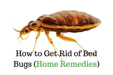 25 best ideas about bed bug remedies on bed