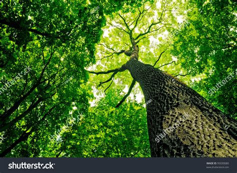 Natur E forest trees nature green wood sunlight stock photo