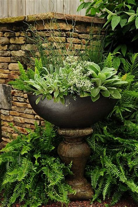foxtail in s ear s ears euphorbia foxtail asparagus fern mixed containers
